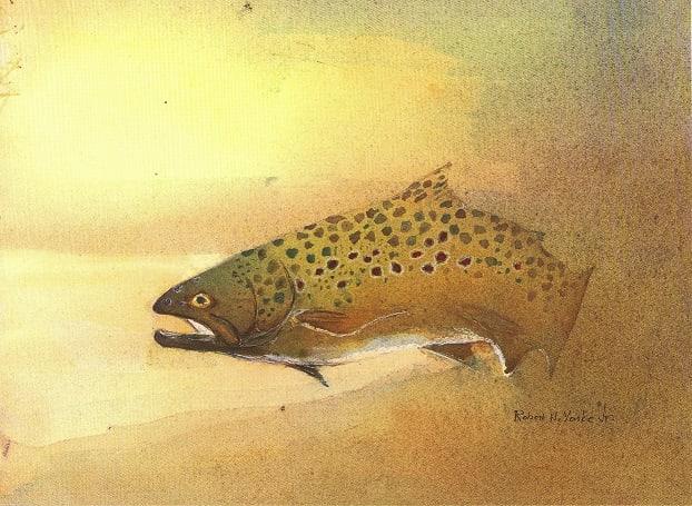 Brown Trout by Robert Yonke