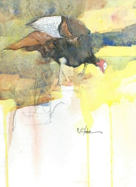 Turkey by Robert Yonke