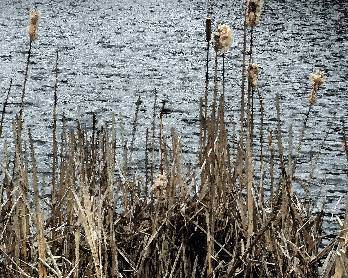 Roxbury Pond Cattails 2