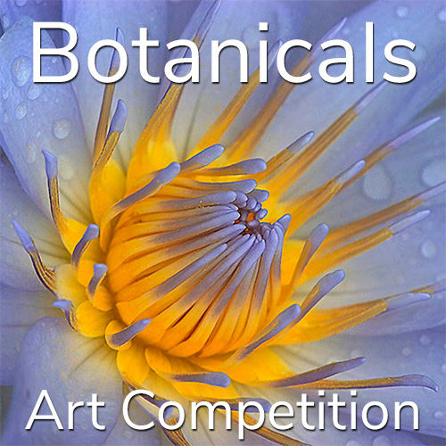 """11th Annual """"Botanicals"""" Online Art Competition"""