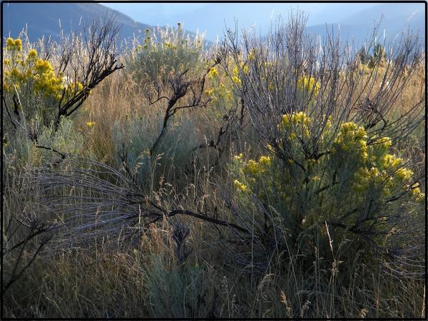 My Meadow I - 2009