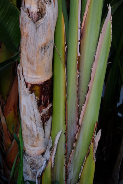 Palm Tree II LA 2018