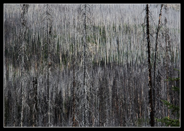 Kootenay Burn - A Four Seasons Series Image #15