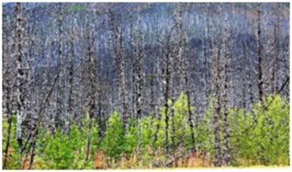 Kootenay Burn - A Four Seasons Series Image #2