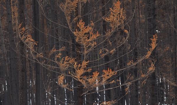 The Kootenay Burn  2018 - Red