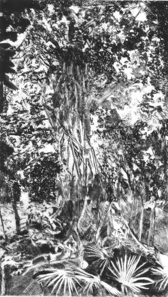 Somewhere in a Rainforest II