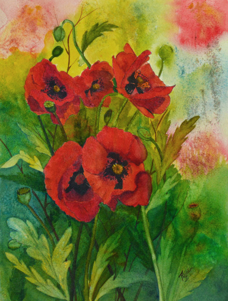 """African Poppies"""