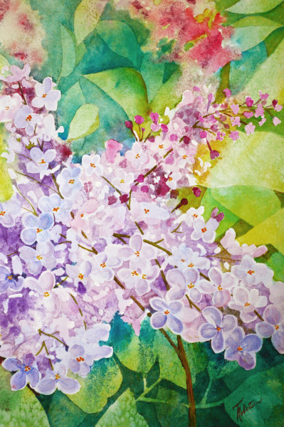 Old Fashion Lilacs