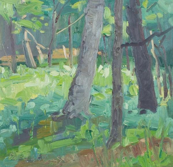 Alphen Woods Summer