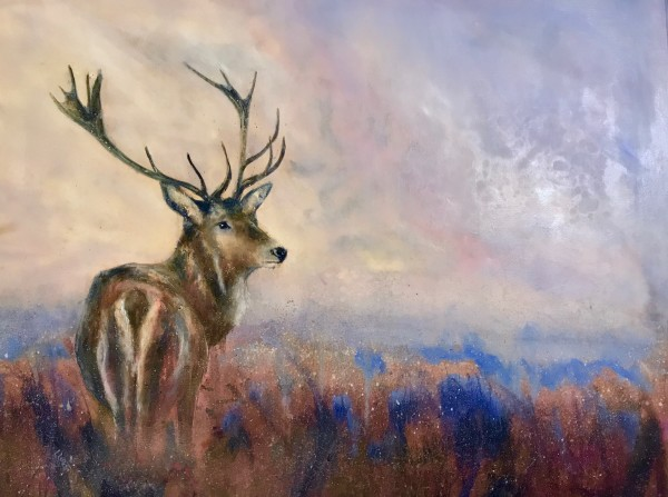 Stag in the frosty dawn light