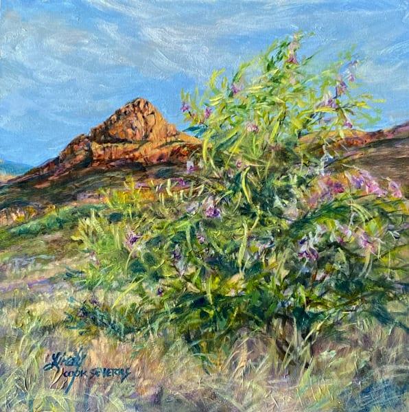 Desert Willow Dawn