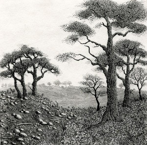 Edge of the woods