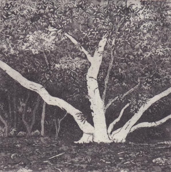 birdwood II