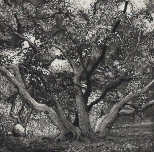 birdwood grove