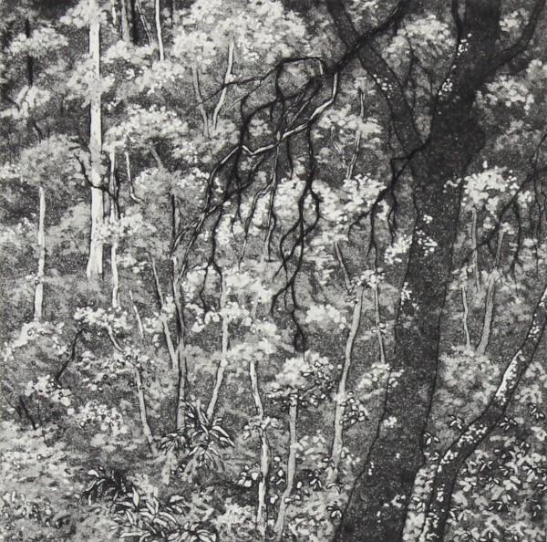 otway treetops