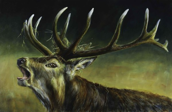 Stag calling