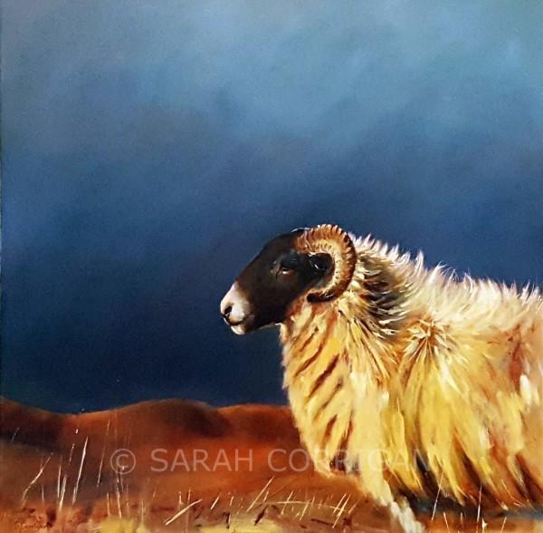 Sheep at Steel Rigg  (II)