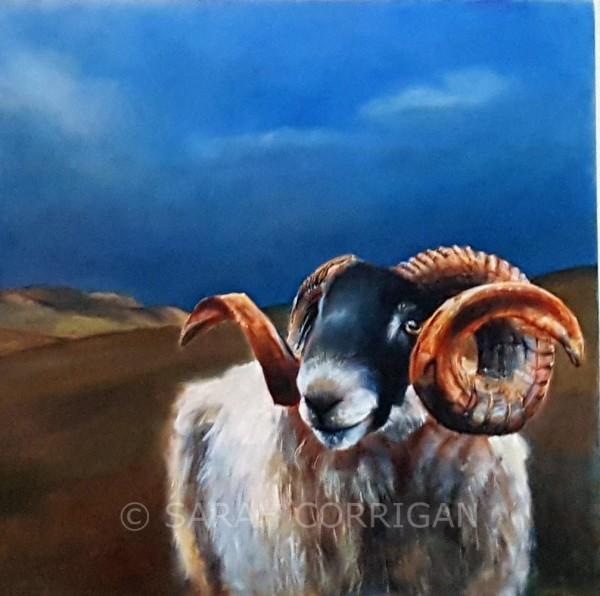 Sheep at Steel Rigg