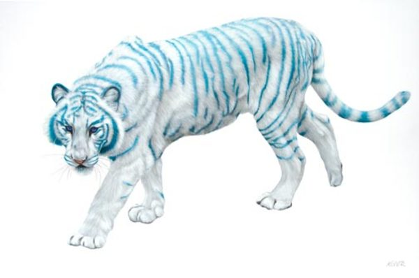 WHITE TIGER ON WHITE, 2009