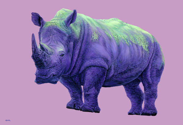 PURPLE RHINO, 2010