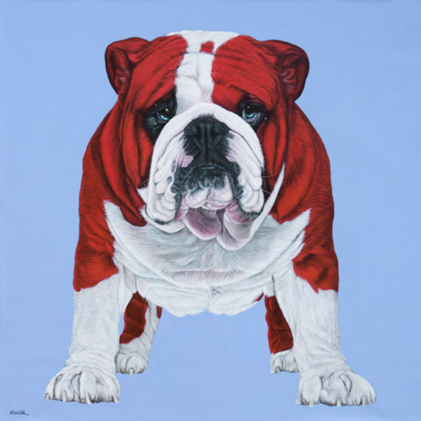 BULLDOG IN RED, 2013