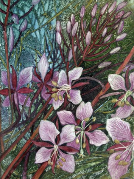 Fireweed I