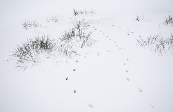 Hazen in de sneeuw