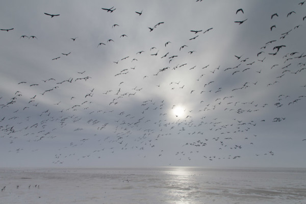 Waddendijk Ameland