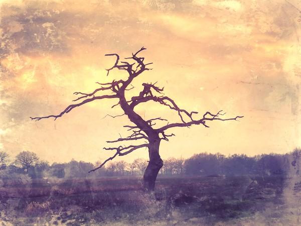 #potd 20190122 'Dead Oak Gasteren'