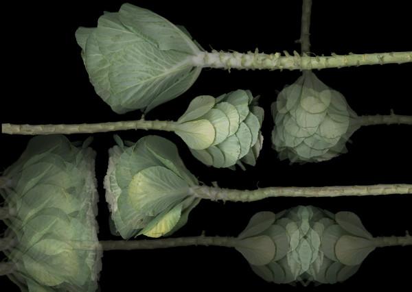 Cabbage Op.5