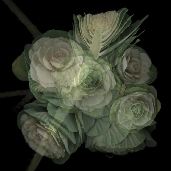 Cabbage Op.2