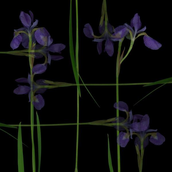 Iris Op.2