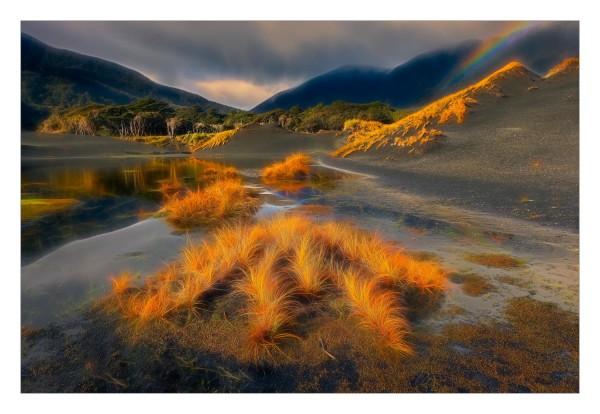 Pingao, Coal river, Fiordland