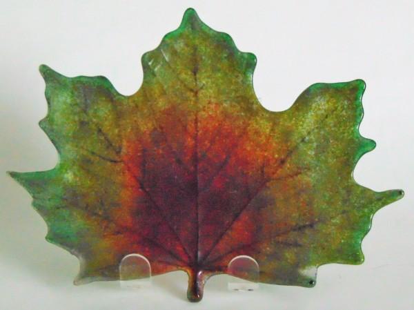 Maple Leaf Plant