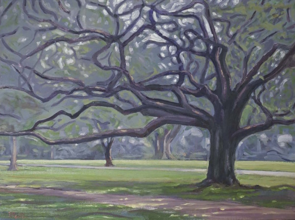 Oak Tree in Audubon Park