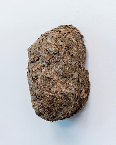 Piel cáscara (Leaf crust)