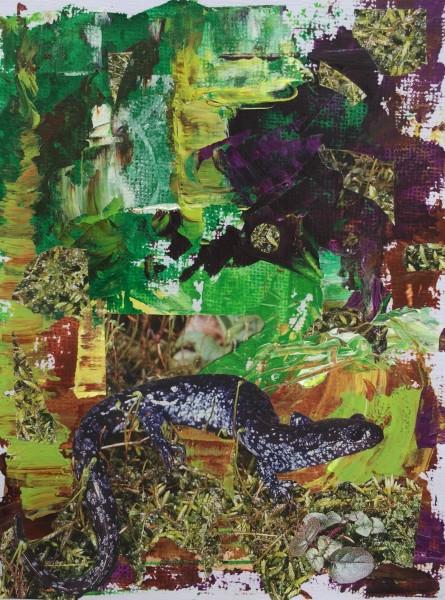 (Salamander) The Forest Floor