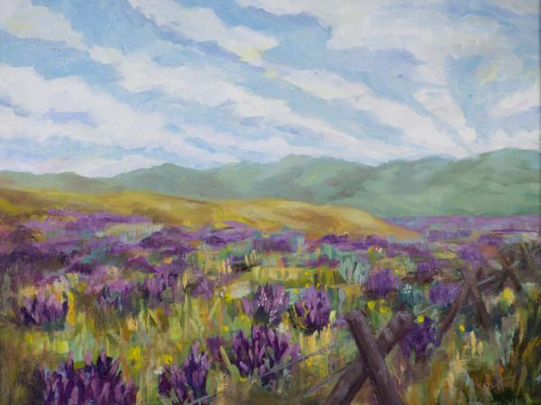 Lupine Fields