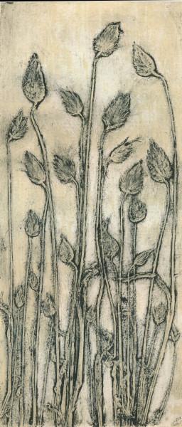 Cotton Tail Grass 2 #1