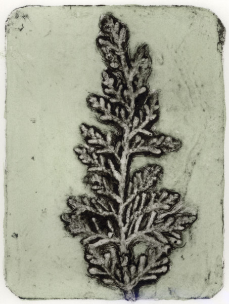 Cypress 2, 6/10