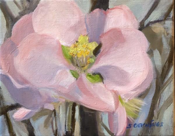 Adora's Blossom