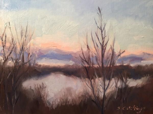 Cedar Branch Mist
