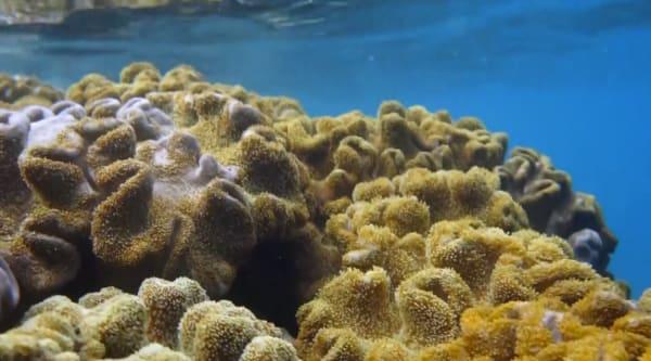 Top of the Reef Beqa Island Figi