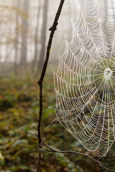 Spider web in morning Fog