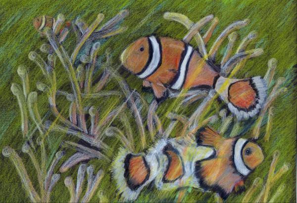 """Clownfish with Sea Anemone"""