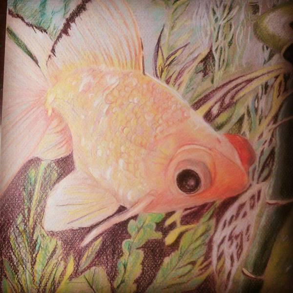 """Fancy Goldfish"""