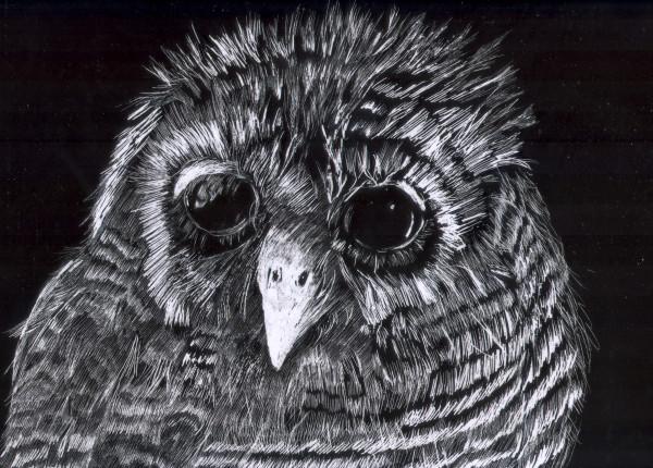 """""""Woodland Owl"""""""