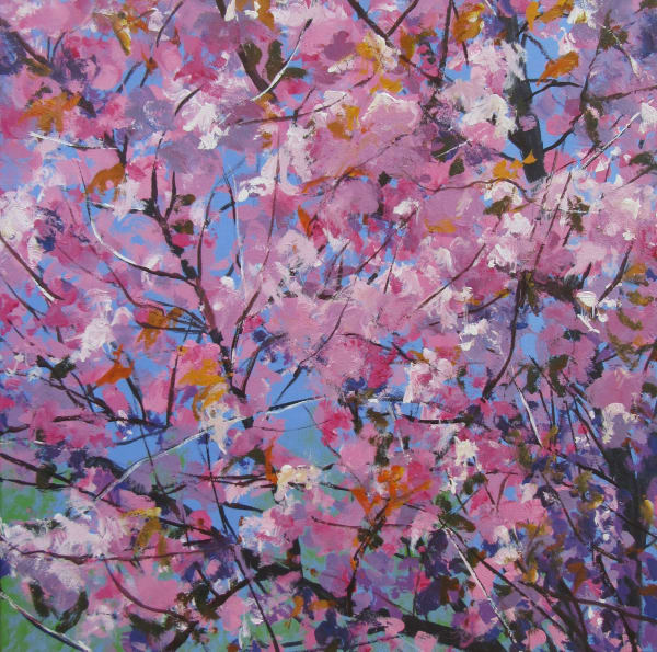 Cherry Blossoms Return
