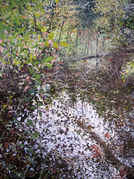Thickets  Near Water