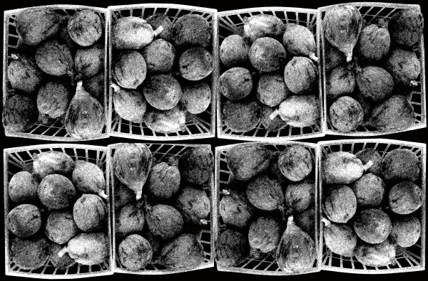 Figs in Black and White